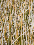 Wild Grass on Chesapeake Bay Shore