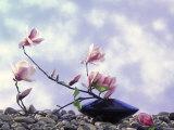 Magnolia Branch in Vase