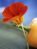Nasturtium Flower Leaning Against a Pepper
