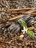 Coffee Beans  Vanilla Pods and Cinnamon Sticks