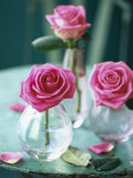 Three Pink Roses in Vases on a Garden Table