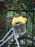 Yellow Roses in Bicycle Basket  Red Climbing Roses Behind