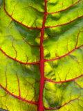 A Chard Leaf