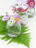 Geraniums and Chrysanthemums in Jars with Fern