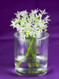 Ramsons (Wild Garlic) Flowers in a Glass