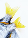 Tails of Two Yellowfin Seabream