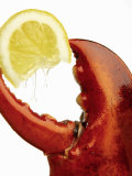 A Wedge of Lemon in a Lobster Claw