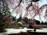 Rock Garden  Shoho-Ji Temple  Japan