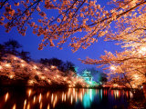 Cherry Blossoms and Takada Castle