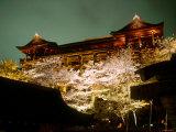 Cherry Blossoms and Kiyomizu Temple