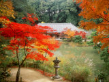 Garden of Joruriji Temple