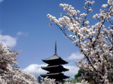 Pagoda & Cherry Blossoms  Kyoto  Japan