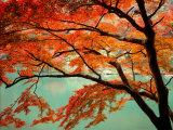 Maple Leaves  Arashi-Yama  Kyoto  Japan