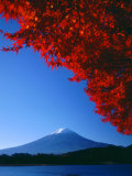 Mt Fuji and Maple Leaves  Lake Kawaguchi  Yamanashi  Japan