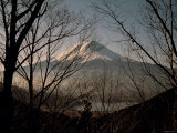 Mt Fuji Beyond Trees