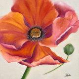 Poppy Flower II