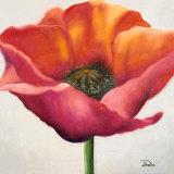 Poppy Flower I