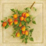 Abricots du Roussillon