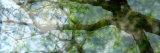 Vegetaux VII
