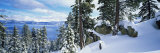 Snow Covered Trees on Mountainside  Lake Tahoe  Nevada  USA