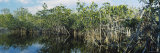 Reflection of Trees in Water  Hells Bay Trail  Everglades National Park  Florida  USA