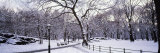 Bare Trees During Winter in Central Park  Manhattan  New York City  New York  USA