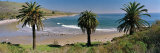 Palm Trees at Refugio State Beach  California  USA
