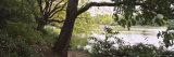 Trees Near a Pond in a Public Park  Central Park  Manhattan  New York City  New York  USA