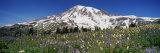 Snowcapped Mountain on a Landscape  Mt Rainier  Mt Rainier National Park  Washington  USA