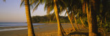 Palm Trees on the Beach  Samara Beach  Guanacaste Province  Costa Rica