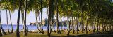 Palm Trees on the Beach  Carrillo Beach  Nicoya Peninsula  Guanacaste Province  Costa Rica