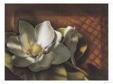Magnolia  no 2