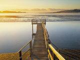 Catlin Coast  South Island  New Zealand