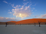 Red dunes and dead acacia tree  Dead Vlei  Namib-Naukluft-Sossusvlei  Namibia