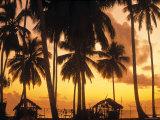 Palm Trees at Sunset  Zanzibar  Tanzania