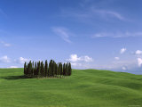 Val d'Orcia  Countryside View  Green Grass and Cypress Trees  Tuscany  Italy