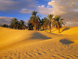 Sand Dunes and Oasis  Desert  Tunisia