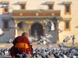 Gandan Khiid Monastery  Ulaan Baatar  Mongolia