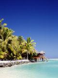 Palm Trees and Tropical Beach  Aitutaki Island  Cook Islands  Polynesia