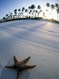 Beach at Zanzibar, Tanzania Papier Photo par Peter Adams