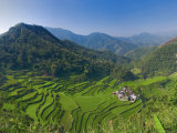 Rice Terraces of Bangaan at Banaue  Luzon Island  Philippines