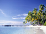Tropical Beach and Palm Trees  Maldives  Indian Ocean