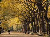 Central Park, New York City, Ny, USA Papier Photo par Walter Bibikow