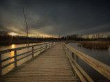 Marsh Path