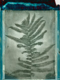 Negative Fern Leaves
