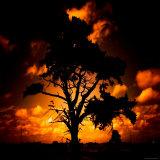Reality Tree