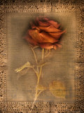 Rose on Fabric