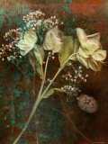 Wilted White Rose and Baby&#39;s Breath