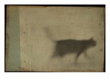 Blurred Cat Walking