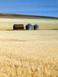 Grain Barn  Rosebud  Alberta  Canada